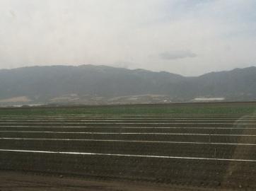 Driving through Salinas.